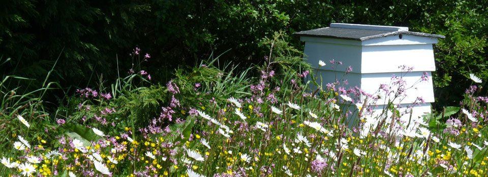 beehives-Saffron-Walden